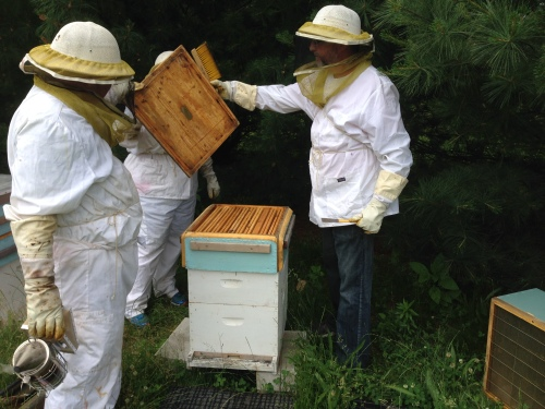 Jeannie, Me, Pete and Steve inspection one of our hives